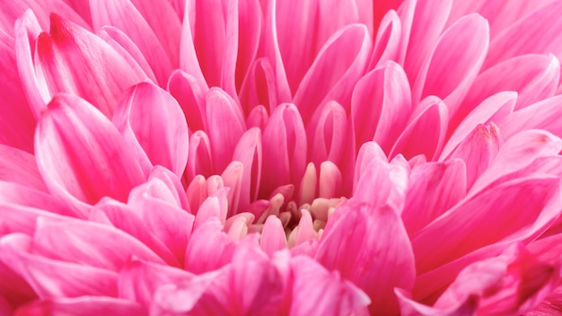 Zbliżenie różowy kwiat szczegóły
