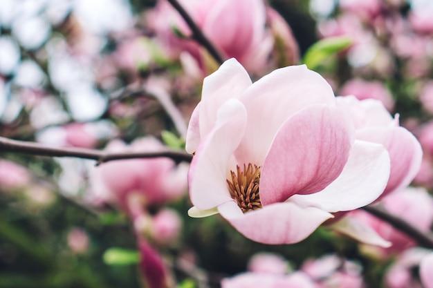 Zbliżenie różowy kwiat