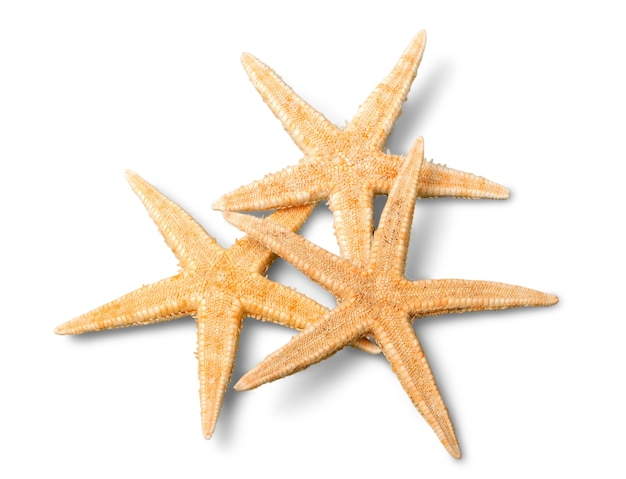 Zbliżenie sea stars na białym tle