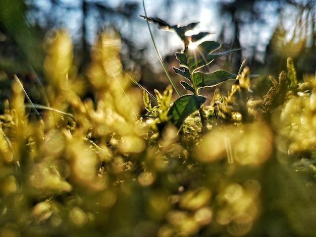 Zbliżenie selektywne fokus widok małej rośliny na bacground wczesnego wschodu słońca