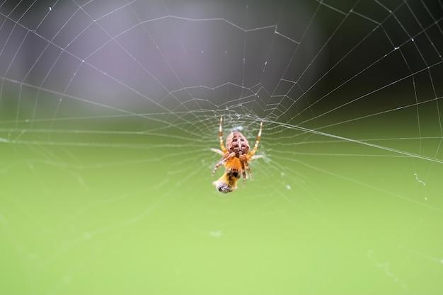 Zbliżenie selektywnej ostrości strzał pająka w sieci