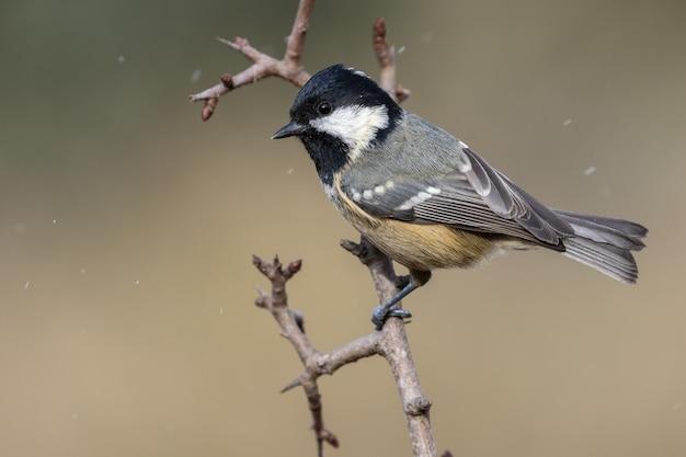 Zbliżenie selektywnej ostrości strzał pięknego ptaka