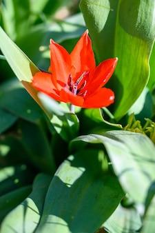 Zbliżenie selektywnej ostrości widok niesamowity kwiat w świetle słonecznym