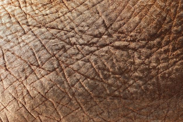 Zbliżenie skóry słonia azjatyckiego - idealne do tła