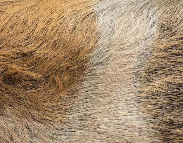 Zbliżenie skóry świni domowej