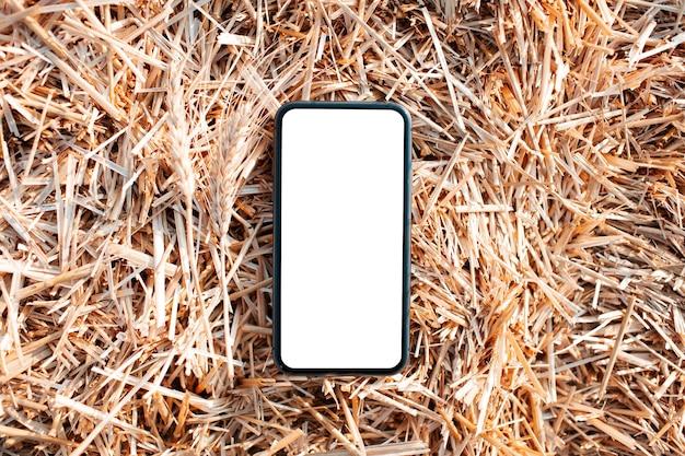 Zbliżenie smartfona z makieta na tle suchej pszenicy.