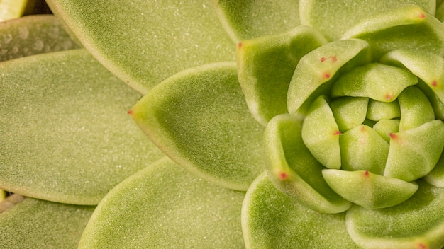 Zbliżenie: soczysta roślina
