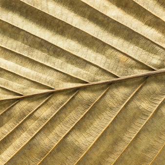 Zbliżenie struktury i tekstury suchych liści dla materiału tła