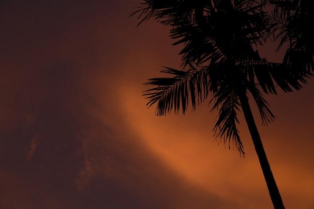 Zbliżenie strzał cienki drzewko palmowe podczas zmierzchu w gil air-lombok, indonezja
