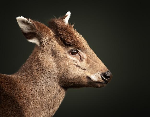 Zbliżenie strzał jelenia dziecka
