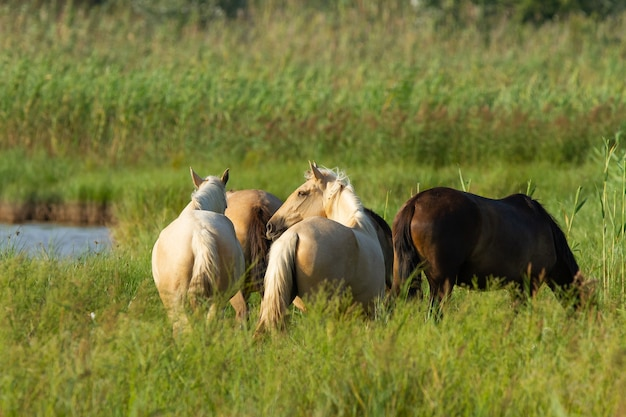Zbliżenie strzał koni w polu