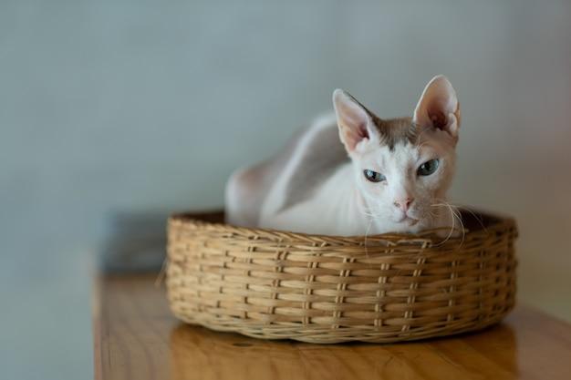 Zbliżenie strzał kota na ziemi, zwierzę domowe
