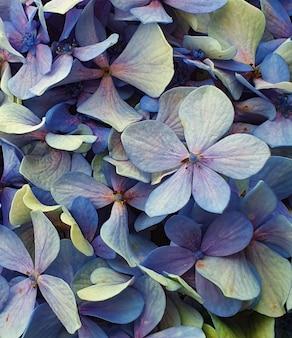 Zbliżenie strzał kwitnących niebieskich kwiatów