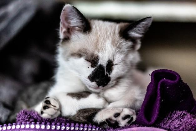 Zbliżenie strzał małego białego kota z zamkniętymi oczami