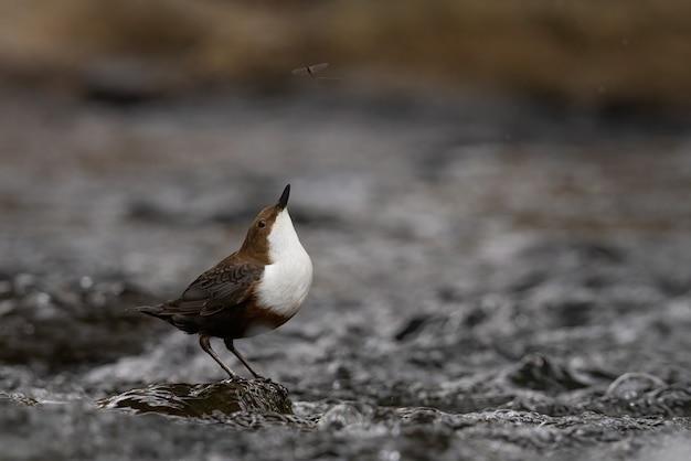 Zbliżenie strzał małego ptaka na mokrej ziemi - idealny do tła