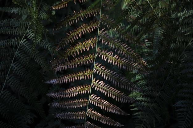 Zbliżenie strzał paprociowi liście