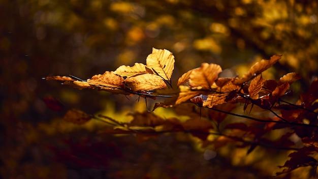 Zbliżenie strzał piękni złoci liście na gałąź z zamazanym tłem