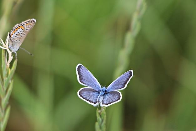 Zbliżenie strzał pięknych motyli na zielonej roślinie