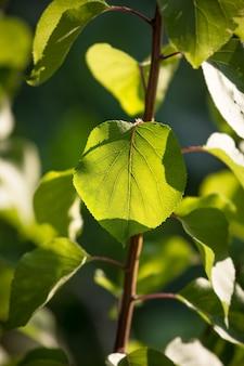 Zbliżenie strzał podświetlany świeży zielony liść na gałęzi