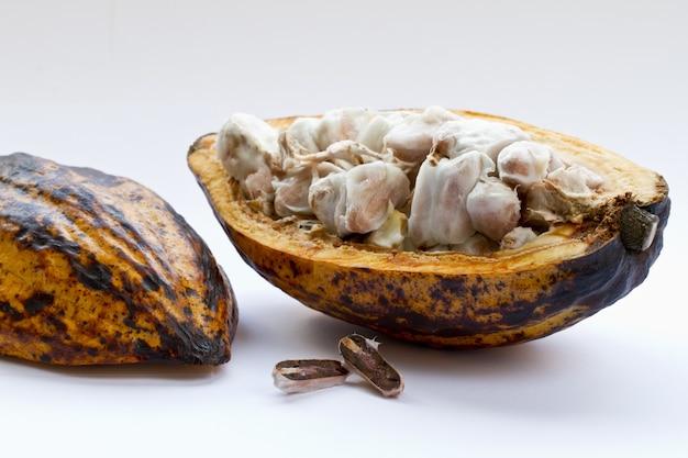 Zbliżenie strzał pokrojonej rośliny kakaowej na białej powierzchni