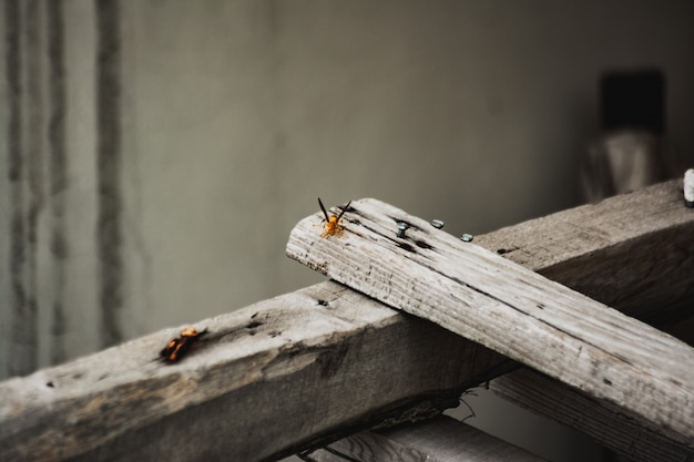 Zbliżenie strzał pomarańczowy skrzydlaty insekt na desce szary drewno