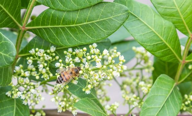 Zbliżenie strzał pszczoły na kwiat