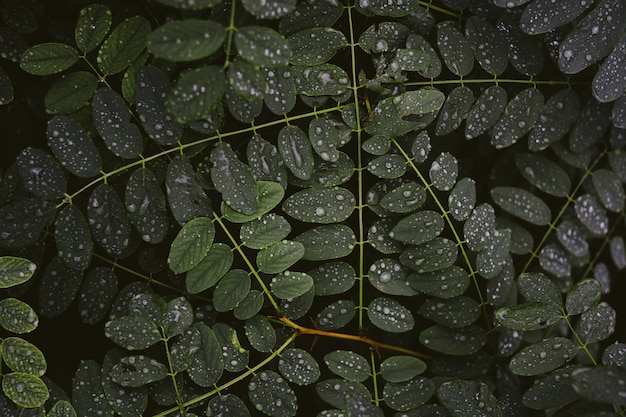 Zbliżenie strzał rosa na gęstych liściach zielona roślina przy nocą