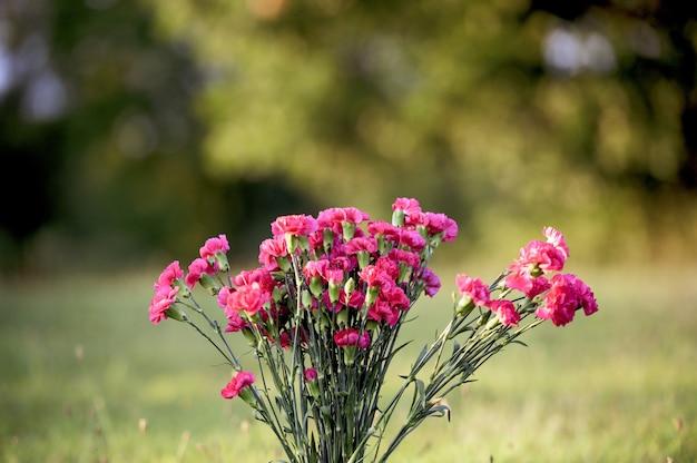 Zbliżenie strzał różowi kwiaty