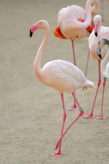 Zbliżenie strzał różowych flamingów