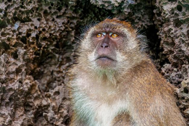 Zbliżenie strzał śliczna małpa z textured kamieniami