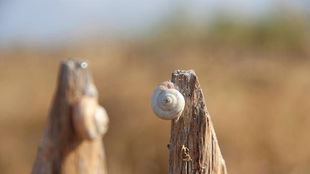 Zbliżenie strzał ślimaczek na kawałku drewno
