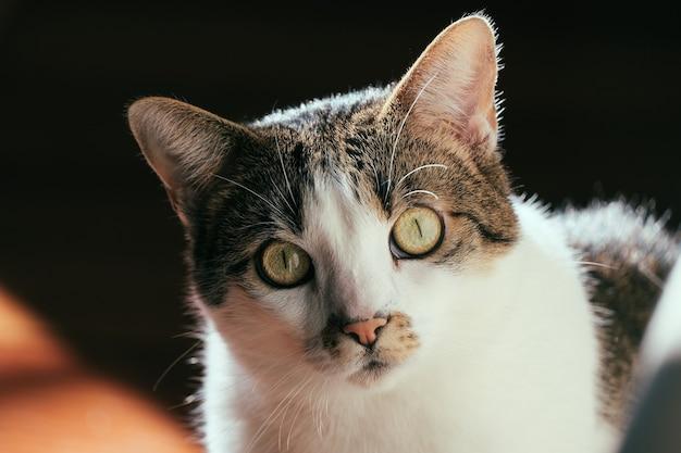 Zbliżenie strzał słodkiego kota domowego z zaskoczoną miną