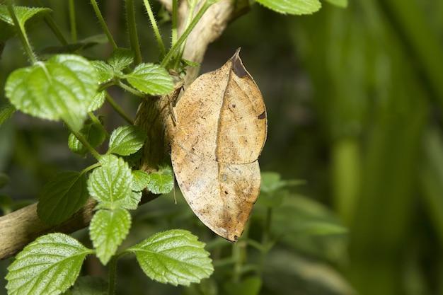 Zbliżenie strzał suchego liścia wśród zielonych