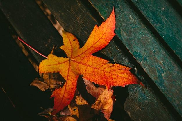 Zbliżenie strzał suchy liść klonowy na drewnianej powierzchni