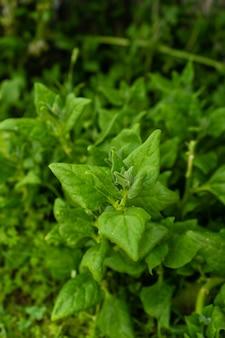 Zbliżenie strzał świeżych zielonych roślin w ogrodzie