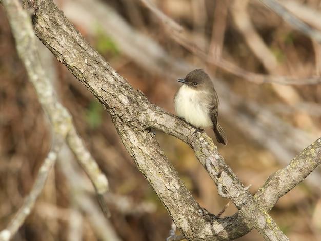 Zbliżenie strzał szarego ptaka na gałęzi