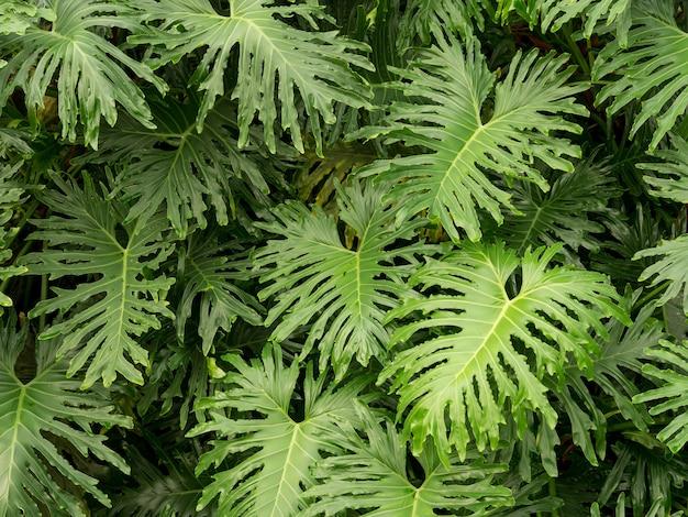 Zbliżenie strzał z tropikalnych roślin zielonych liści