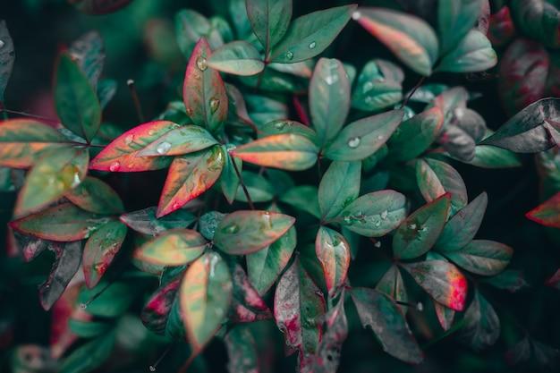 Zbliżenie strzał z zielonych i czerwonych liści pokrytych kroplami rosy