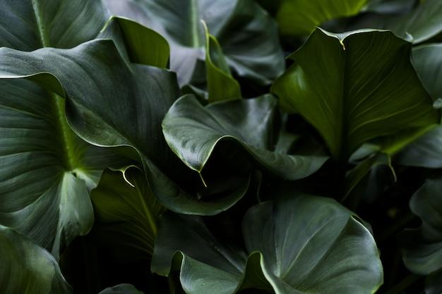 Zbliżenie strzał zieleni liście