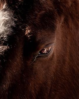 Zbliżenie strzelający oko dziki bizon
