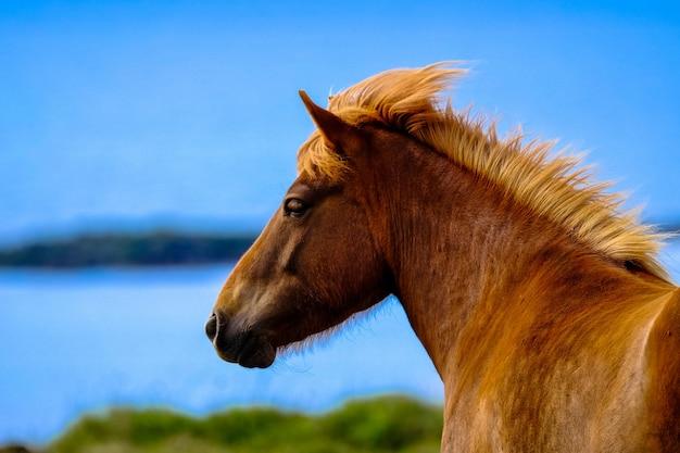 Zbliżenie strzelał brown koń z zamazanym naturalnym tłem