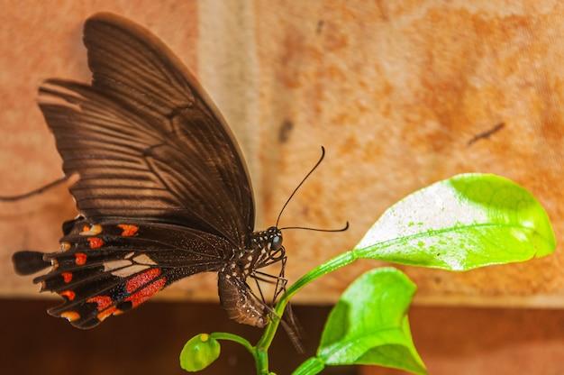 Zbliżenie strzelał brown motyl na zielonej roślinie