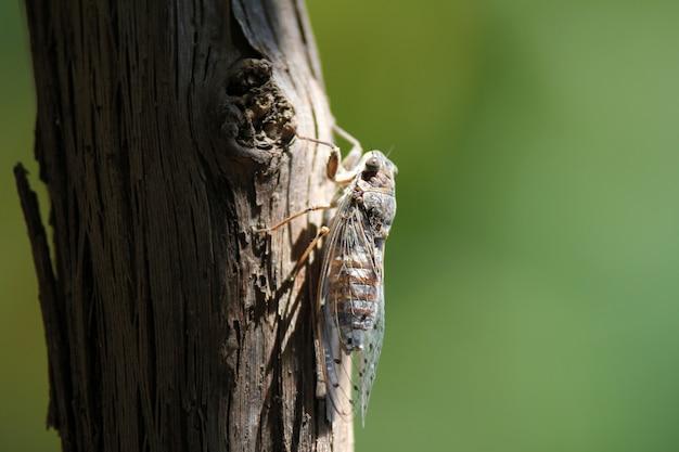 Zbliżenie strzelał insekt z skrzydłami na drzewie