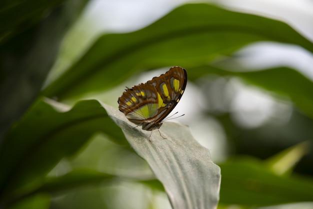 Zbliżenie strzelał piękny motyl na zielonej roślinie z zamazanym tłem