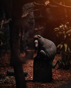 Zbliżenie strzelał rzadki tropikalny małpi obsiadanie na drewnianej powierzchni
