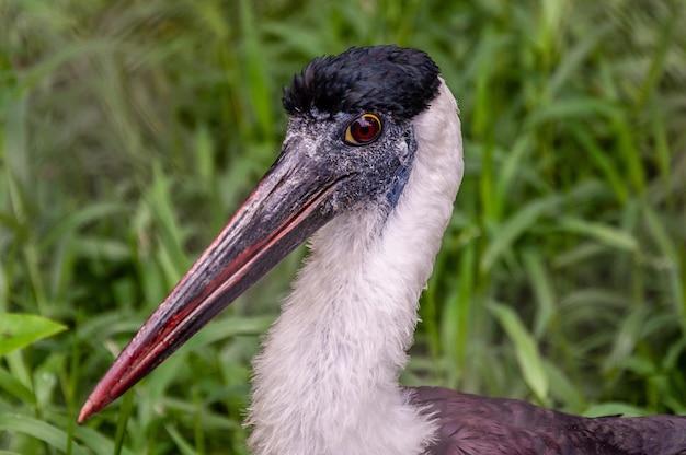 Zbliżenie strzelał spoonbill ptaka na zamazanym naturalnym tle