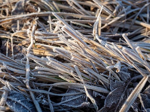 Zbliżenie suchej trawy w wiosennym polu pokrytym szronem. rano, siano, tło, mróz