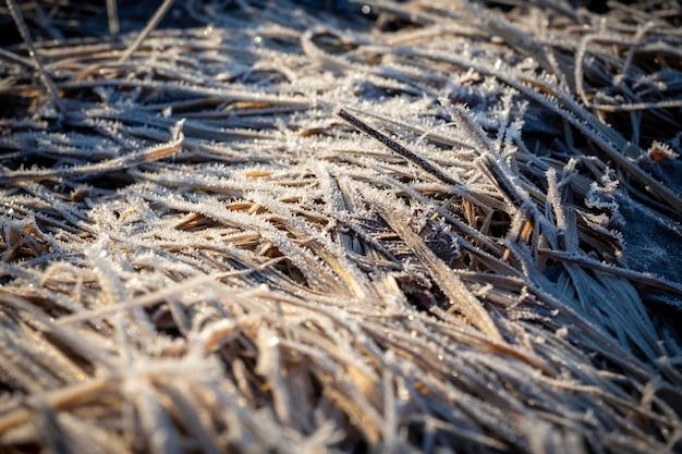 Zbliżenie suchej trawy w wiosennym polu. siano, tło