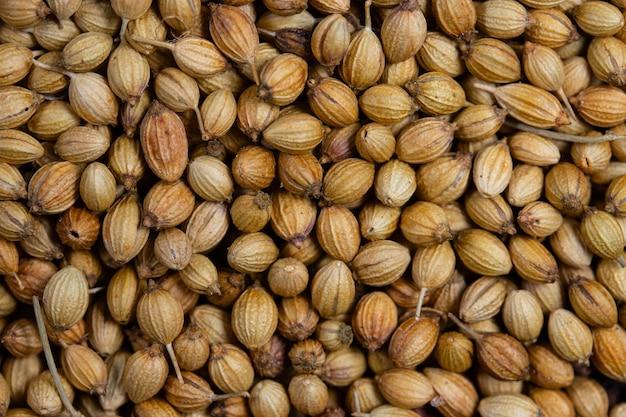 Zbliżenie suszonych nasion kolendry, małej kulki białej bladej lub jasnobrązowej o pachnącym aromacie stosowanym jako pasta curry