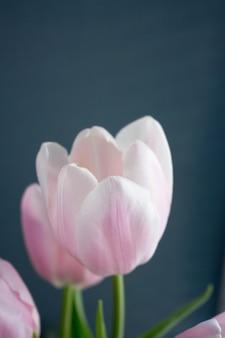 Zbliżenie światło różowy tulipan